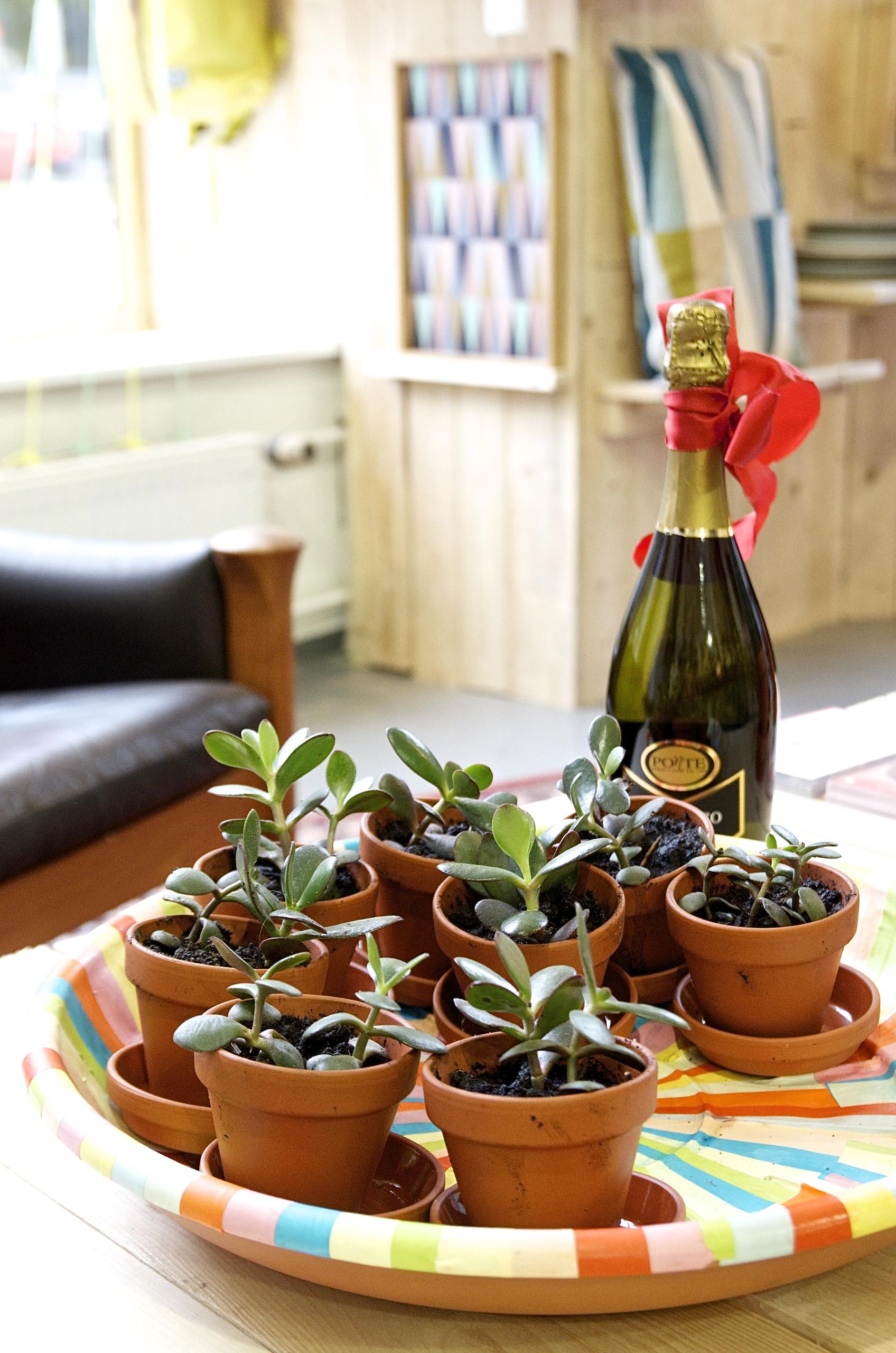 Sekt, Succulent