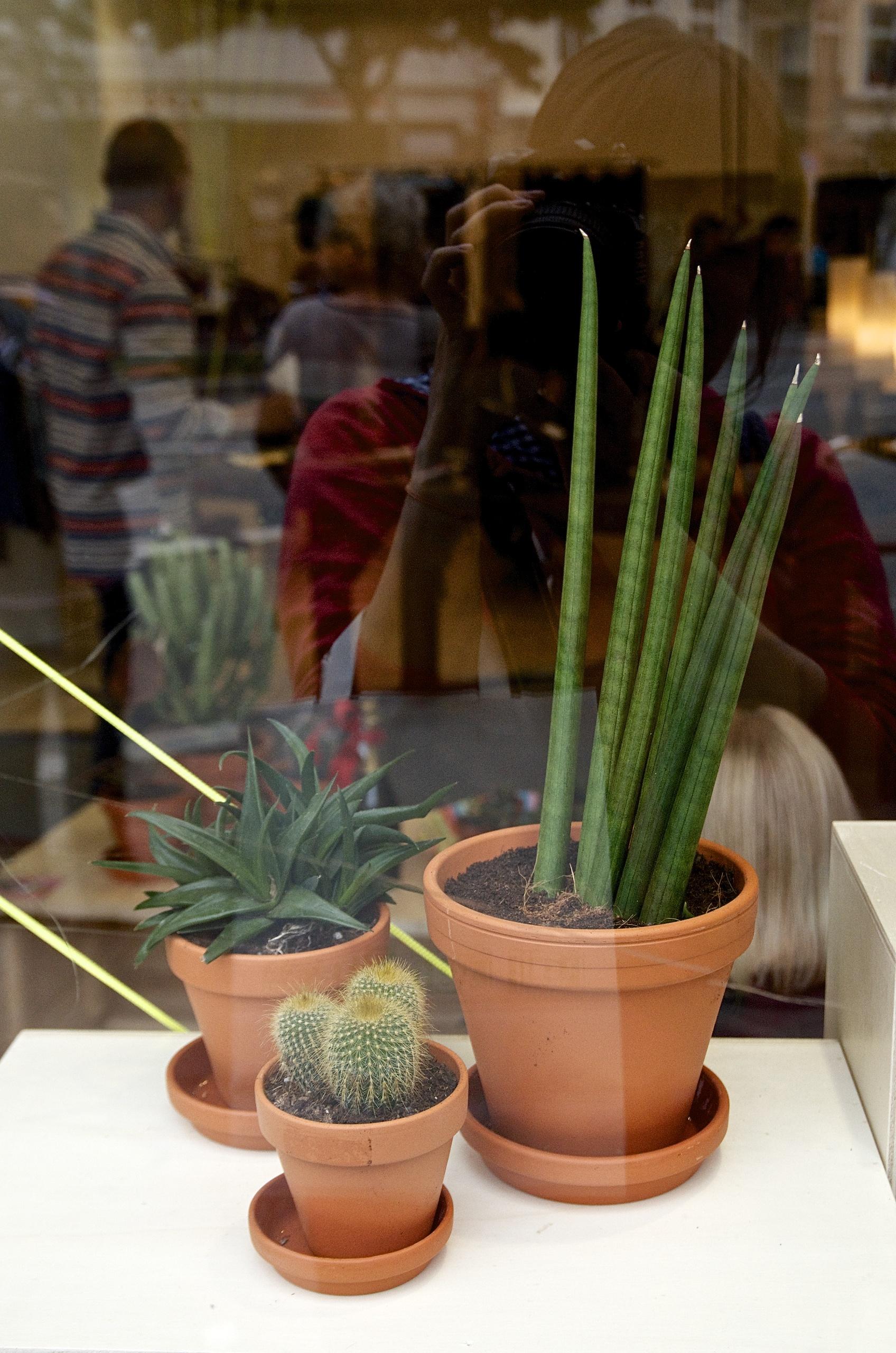 Grünpflanzen, Schaufenster, Spiegelung