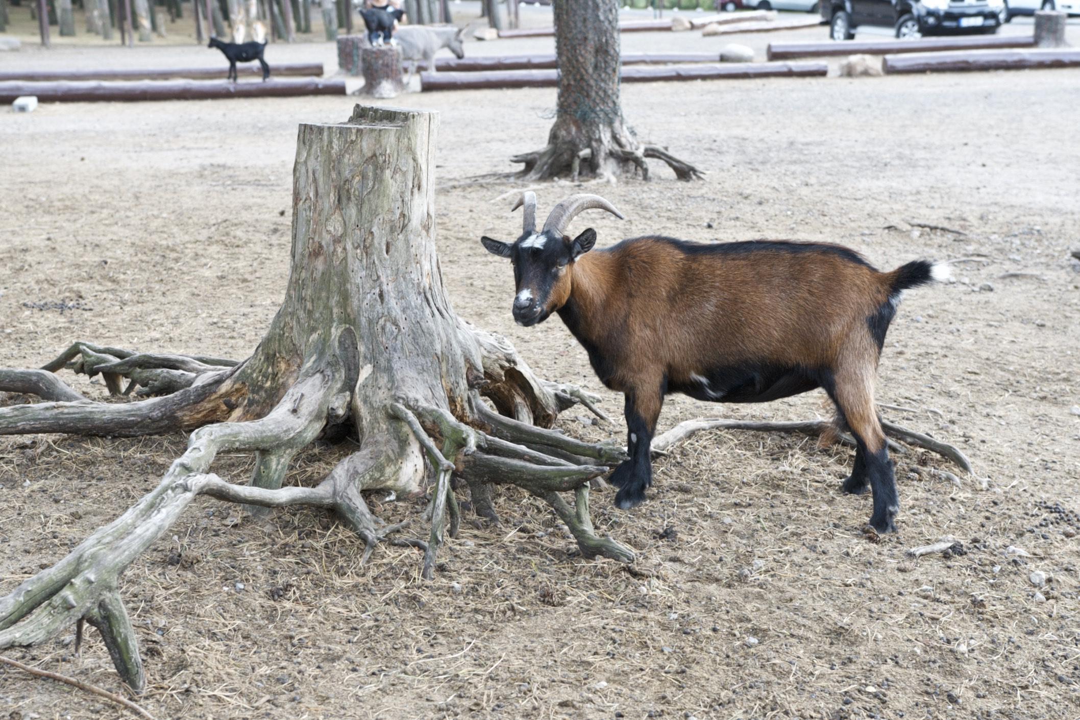 Streichelzoo im Serengeti Park Hodenhagen