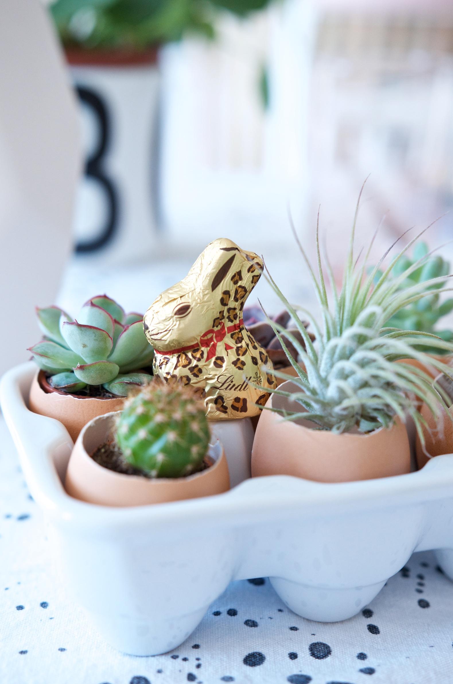 Mini Sukkulenten und Airplant in Eierschalen als ausgefallene Deko für den Osterbrunch Tisch mit Goldhase im Leo-Look von Lindt als Highlight