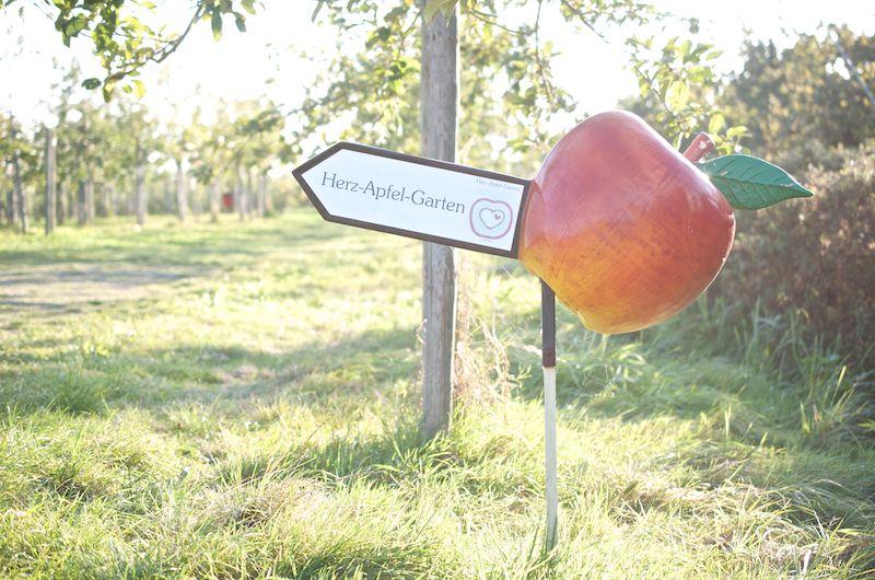 Äpfel pflücken im Alten Land - Herzapfelhof Altes Land Hamburg