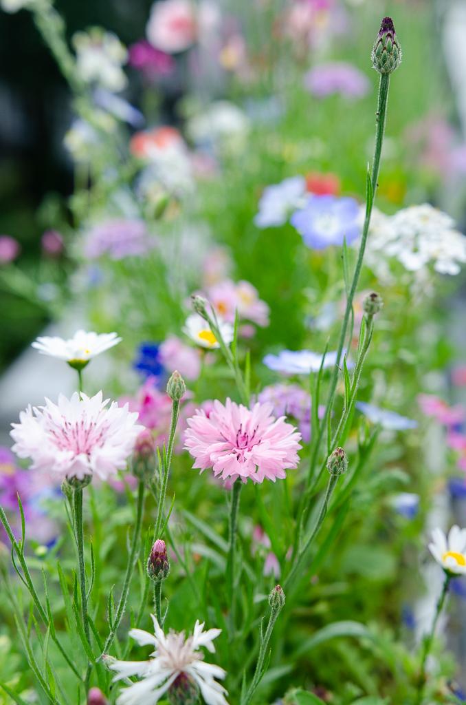 Blumen auf dem Balkon: Easy Peasy Schmetterlingswiese